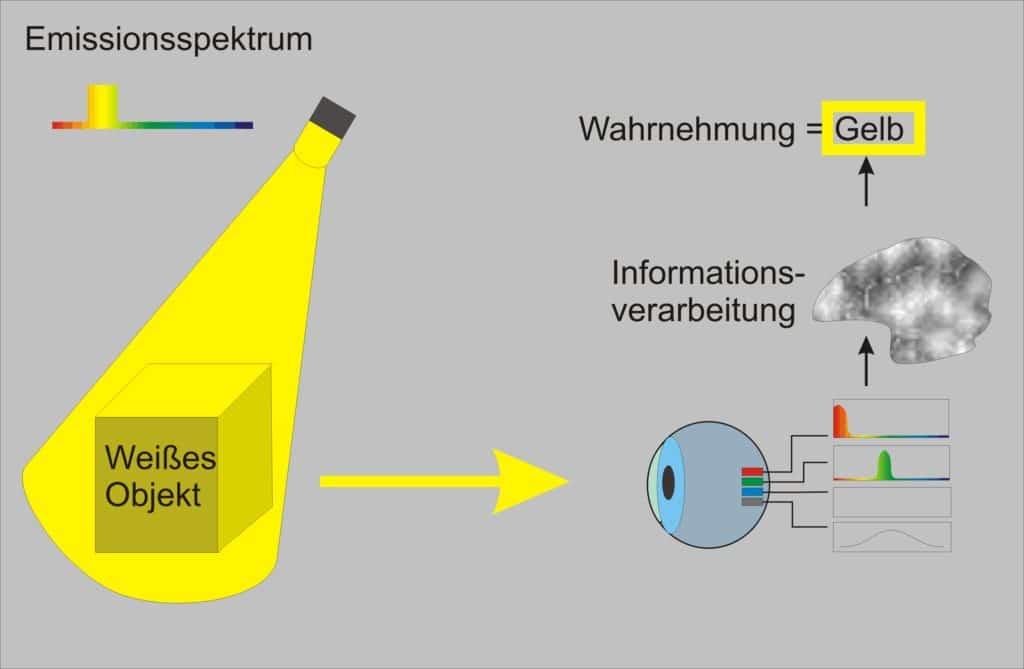Es wird gezeigt das gelbes Licht die roten und Grünen Sehzapfen anregt und wir gelb sehen.