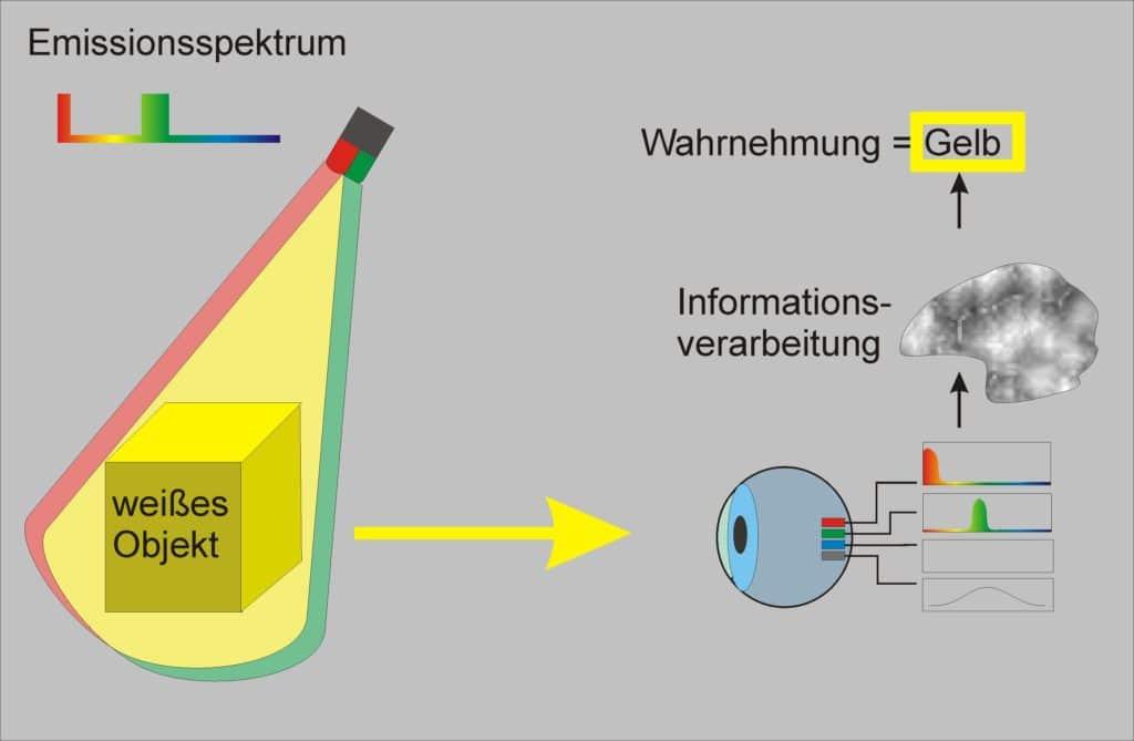 Es wird gezeigt das rote und grüne Spektralfarben die gleichen Sinneszellen anregen und damit das Gehirn ebenfalls gelb gesehen wird.